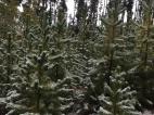 October 1 Grand Lake Snow 2