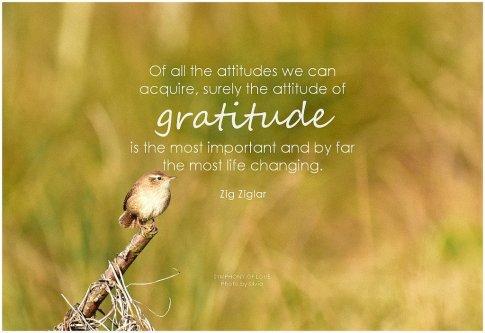 Zig Ziglar Gratitude